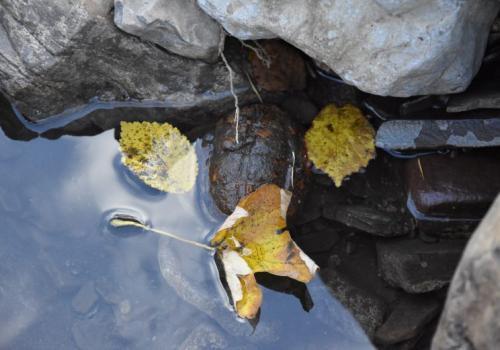 Granat w wodzie. Fot: Tomasz Lenkiewicz